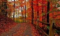 fall, park, Nature, leaves, walk, autumn, path, листья, colorful, road, for ...