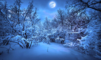 snow, christmas tree, Merry christmas, new year, magic christmas night, win ...