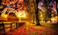 fall, walk, autumn, colors, colorful, park, Nature, leaves, road, trees, pa ...