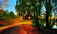trees, autumn, rays, nature, sun, Leaves, hdr, walk, river, sunset, water,  ...