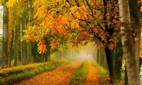 листья, park, trees, leaves, walk, fall, forest, road, colors, colorful, Na ...