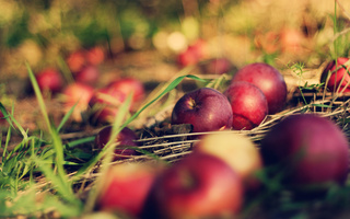 bokeh, яблоки, orchard, трава, Земля, макро, apple, боке