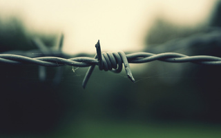 wallpapers - miscellaneous - Barbed Wire, Macro focus Greens and Greys.jpg - Minus