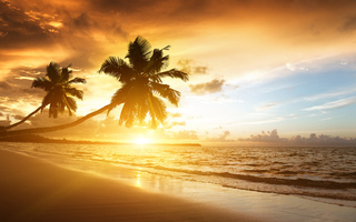 Caribbean, , , , palms, beach, ocean, sea, sky, , sunrise, , shore, sunlight, , clouds, , ,