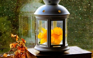 narcissus, paper, flower, Lantern, фонарь, leaves, spring, autumn, drops, window