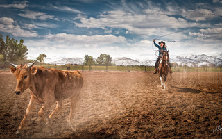 rodeo, Cowgirl, farm, ropping cattle, horse