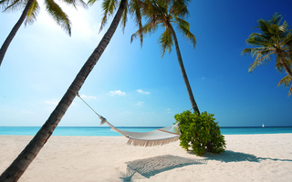 hammock, green plant, white sand, palm trees, boat, Beaches
