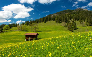 grass, nature, green field, germany, Pasture in the bavarian alps, clouds, sky, trees, landscape