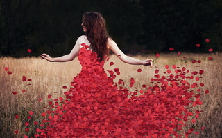 rosedress, petals, Flowers