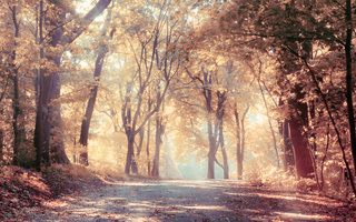 Autumn trees, leaves, road, beautiful, sunbeams, nature, fog, landscape