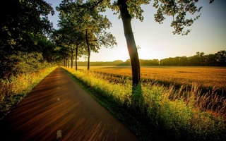 grass, walk, вид, road, trees, природа, field, Nature, sunset, view, forest